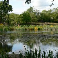 wildlife ponds at Balloch Wood Community Project